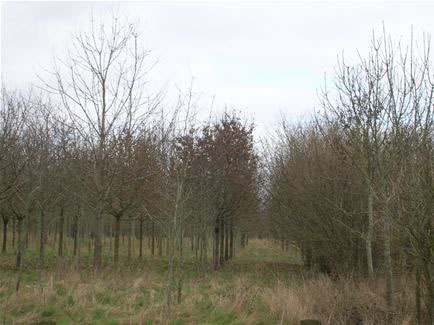 great-somerford-estate-wood