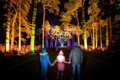 Explore the enchanted forest at Westonbirt's Enchanted Christmas